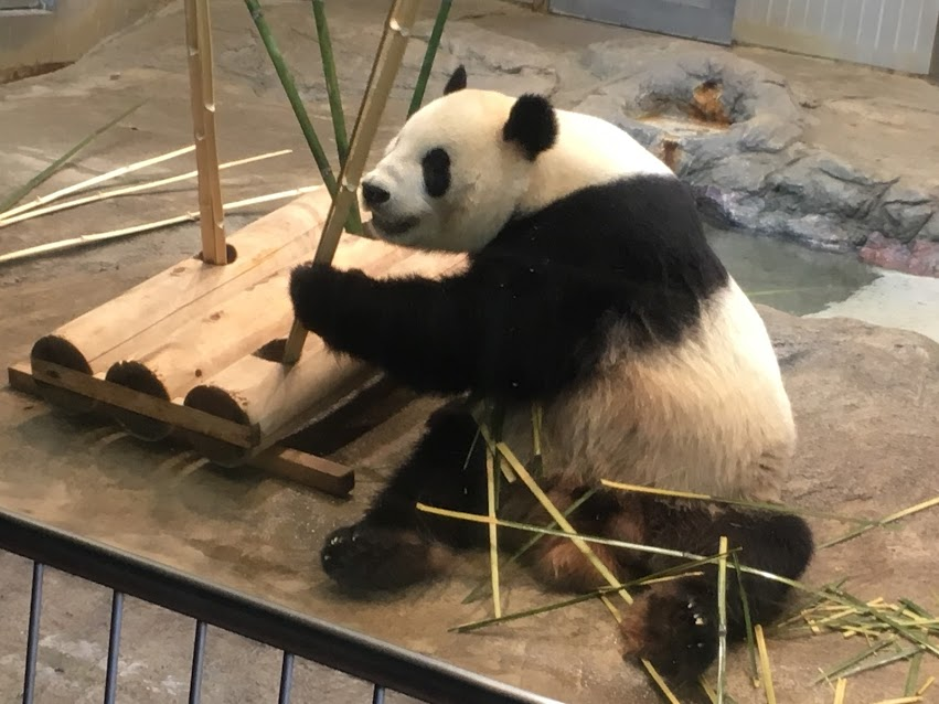上野動物園 リーリー君