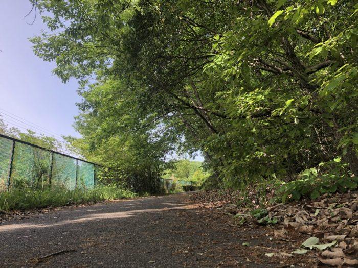 東山&平和公園一万歩30km